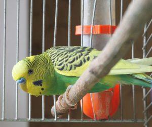 энтеросгель для попугая
