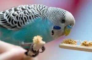 энтеросгель попугаю