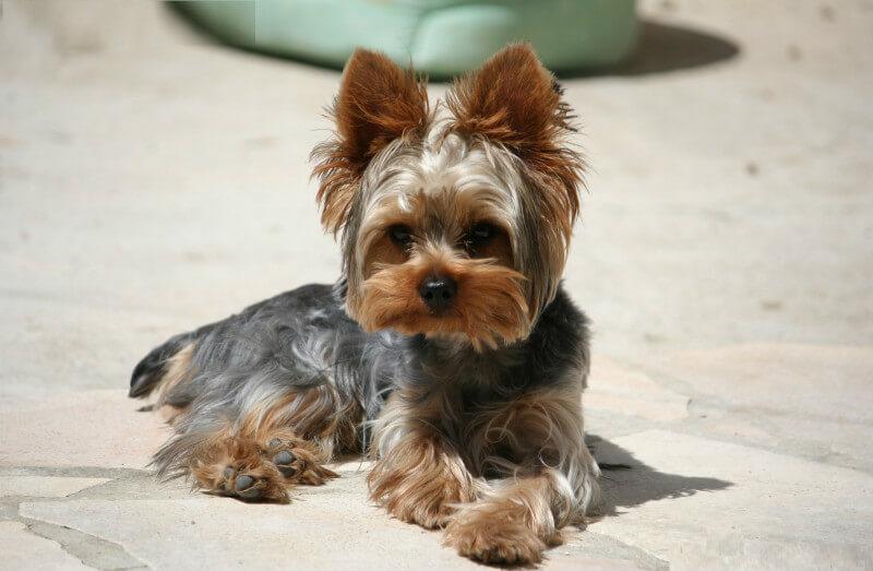 Энтеросгель щенку при поносе: дозировка, методы применения