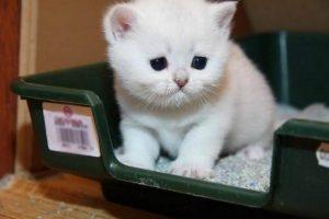 энтеросгель котенку